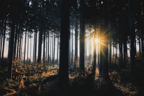 Sunlight Trees Silhouettes  - OlcayErtem / Pixabay